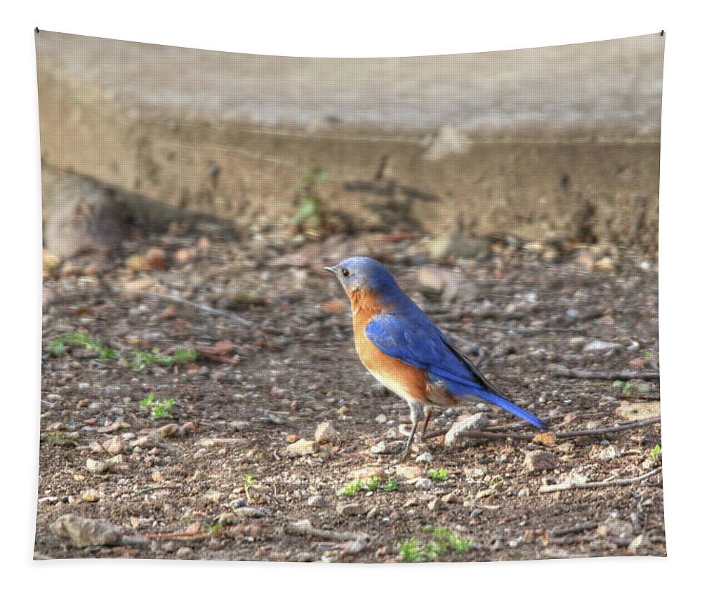 Eastern Bluebird Tapestry featuring the photograph Eastern Bluebird by Michael Munster