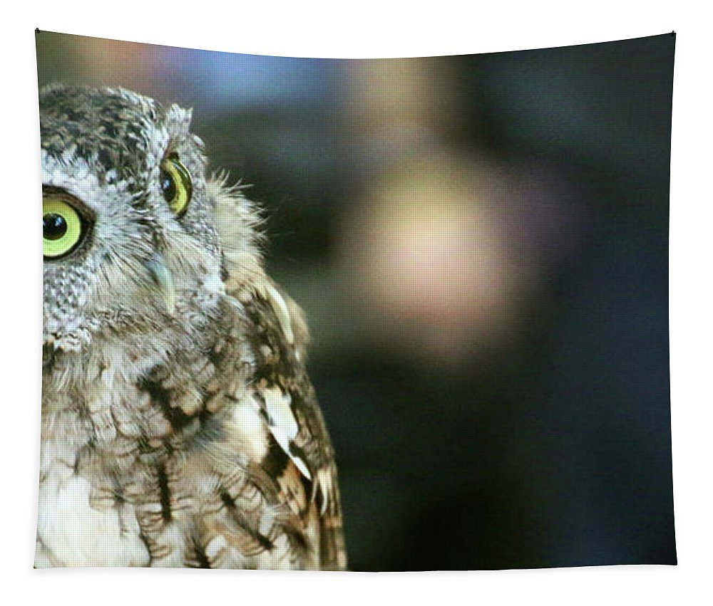 Eastern Screech Owl Tapestry featuring the photograph Eastern Screech Owl-6945 by Gary Gingrich Galleries