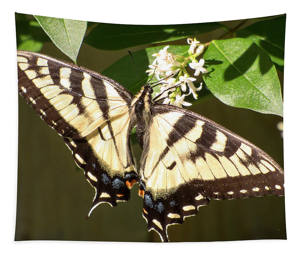Butterfly Tapestry featuring the photograph Eastern Tiger Swallowtail Butterfly Wingspan by Leslie Montgomery