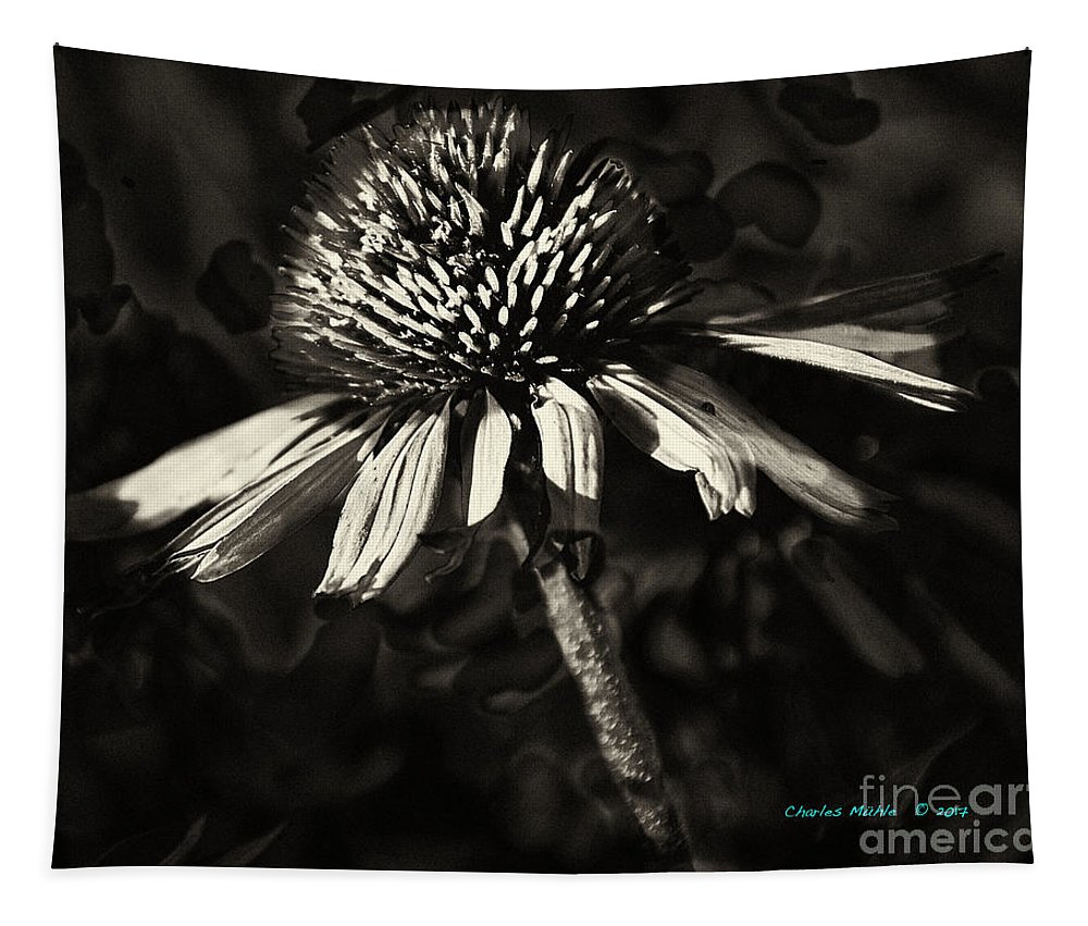 Echinacea Tapestry featuring the photograph Echinacea by Charles Muhle