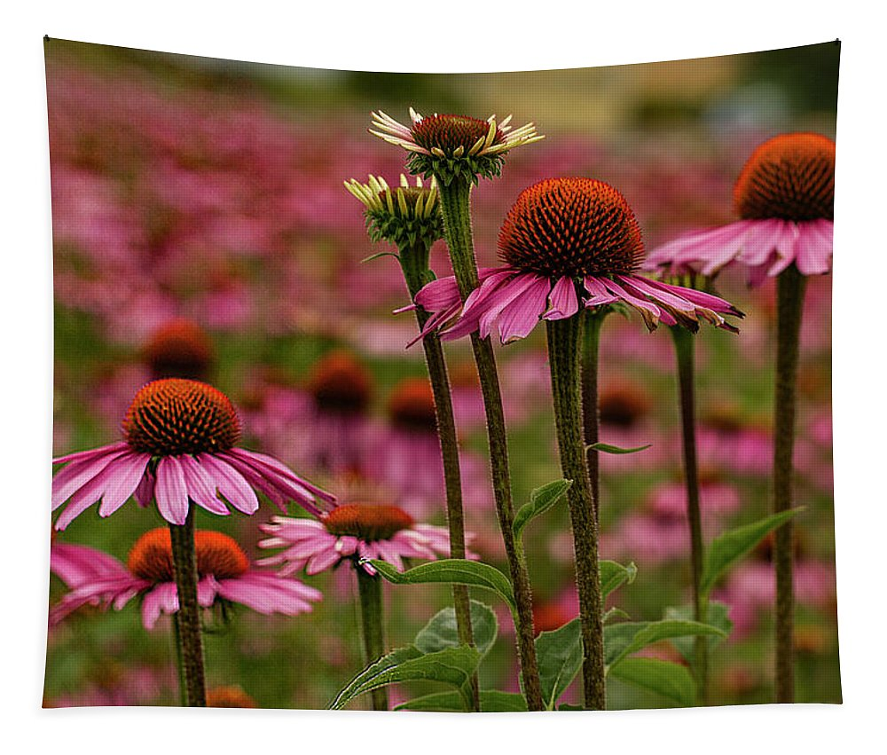 Jean Noren Tapestry featuring the photograph Echinacea Front And Center by Jean Noren