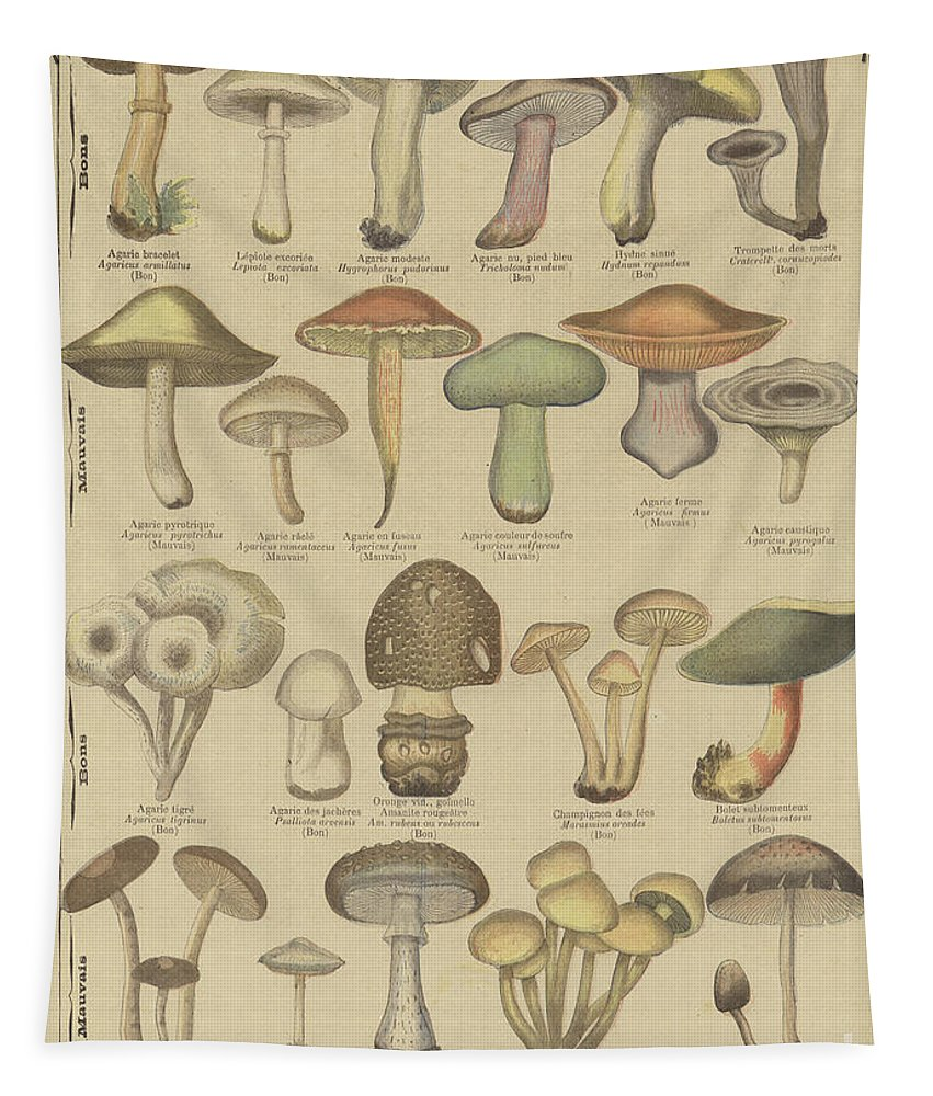 Food Tapestry featuring the drawing Edible And Poisonous Mushrooms by French School
