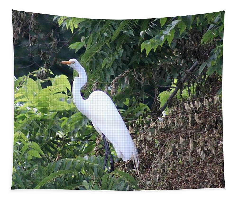 Karen Silvestri Tapestry featuring the photograph Egret In A Tree by Karen Silvestri