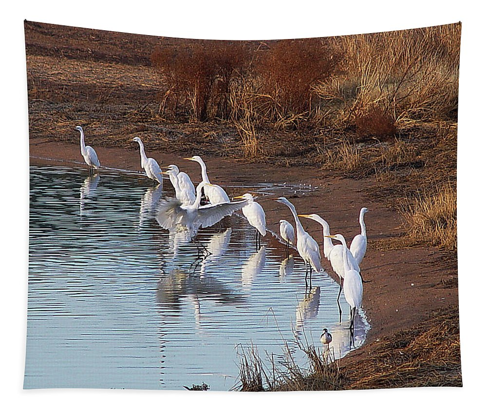 Egrets Gathering For Fishing Contest Tapestry featuring the photograph Egrets Gathering For Fishing Contest. by Tom Janca