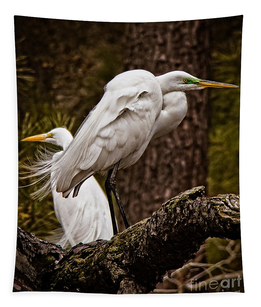 Chicoteague Tapestry featuring the photograph Egrets On A Branch by Tom Gari Gallery-Three-Photography