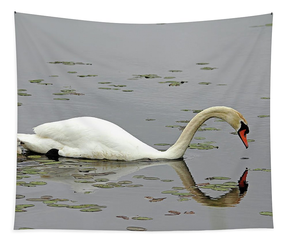 Mute Swans Tapestry featuring the photograph Elegant And Too Cute by Debbie Oppermann