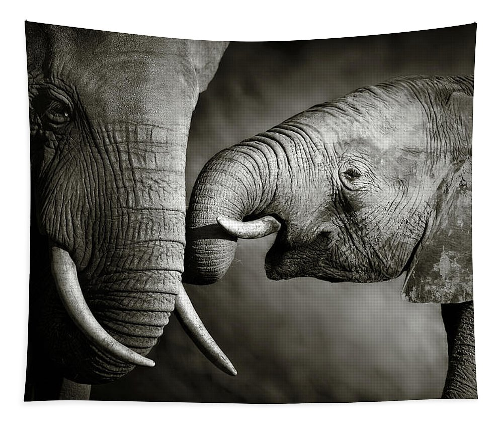 Elephant; Interact; Touch; Gently; Trunk; Young; Large; Small; Big; Tusk; Together; Togetherness; Passionate; Affectionate; Behavior; Art; Artistic; Black; White; B&w; Monochrome; Image; African; Animal; Wildlife; Wild; Mammal; Animal; Two; Moody; Outdoor; Nature; Africa; Nobody; Photograph; Addo; National; Park; Loxodonta; Africana; Muddy; Caring; Passion; Affection; Show; Display; Reach Tapestry featuring the photograph Elephant Affection by Johan Swanepoel