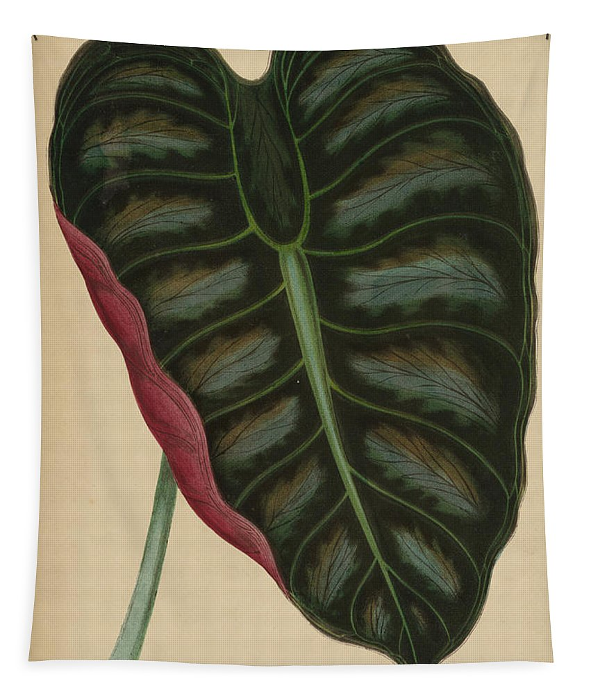 Leaf Tapestry featuring the painting Elephant Ear, Metallic Taro Metallica by English School