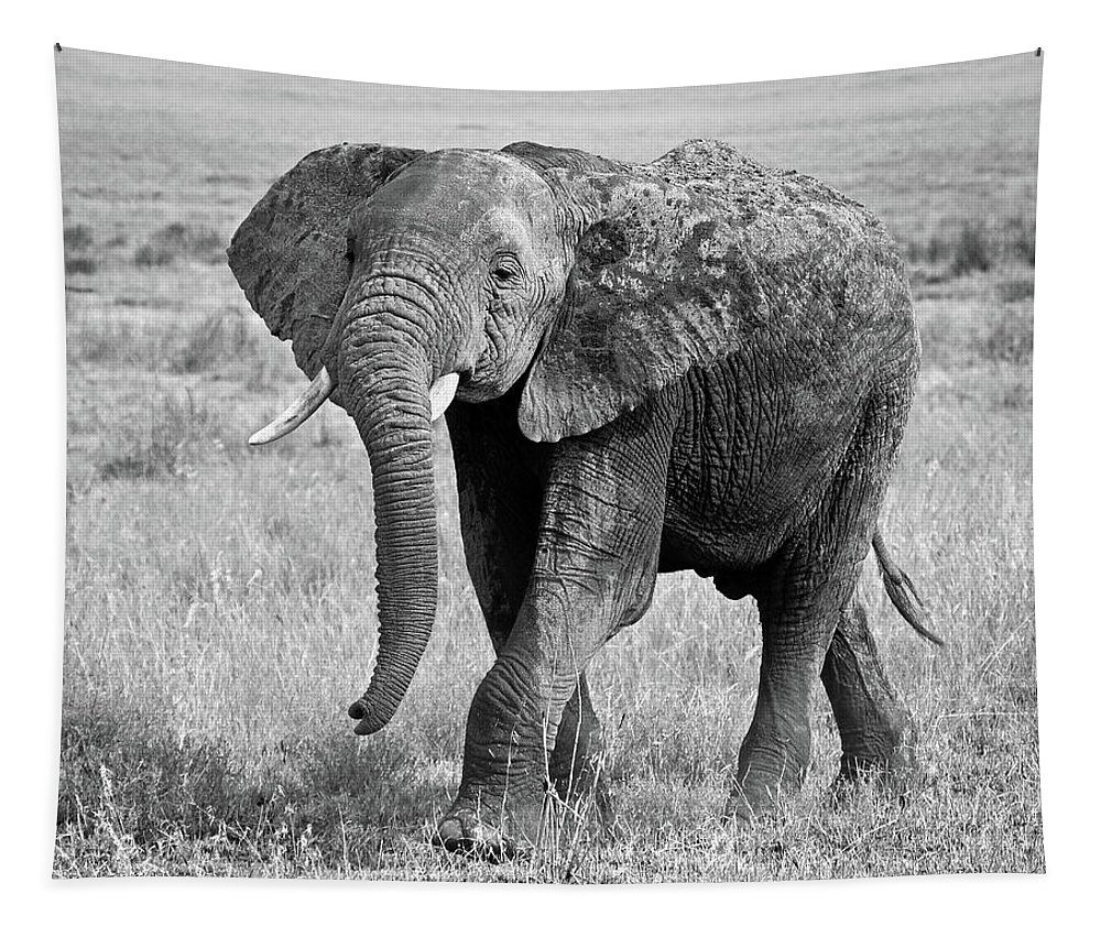 Elephant Tapestry featuring the photograph Elephant Happy And Free In Black And White by Gill Billington