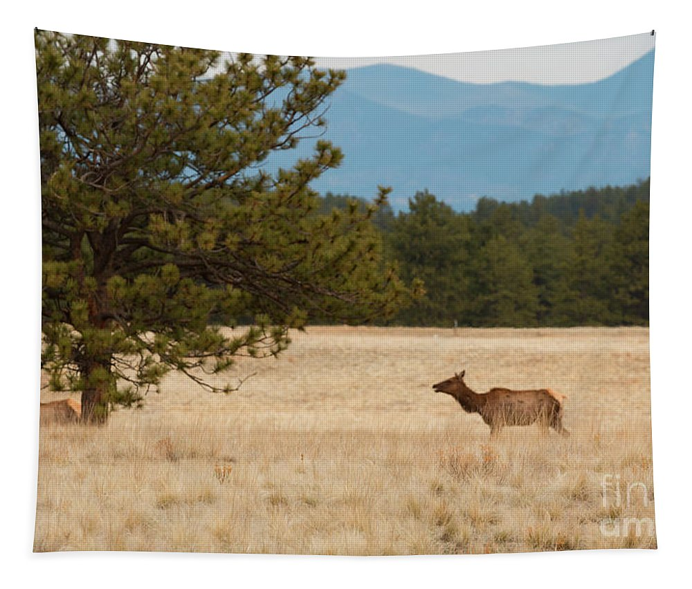Elk Tapestry featuring the photograph Elk In The Fossil Beds by Steve Krull
