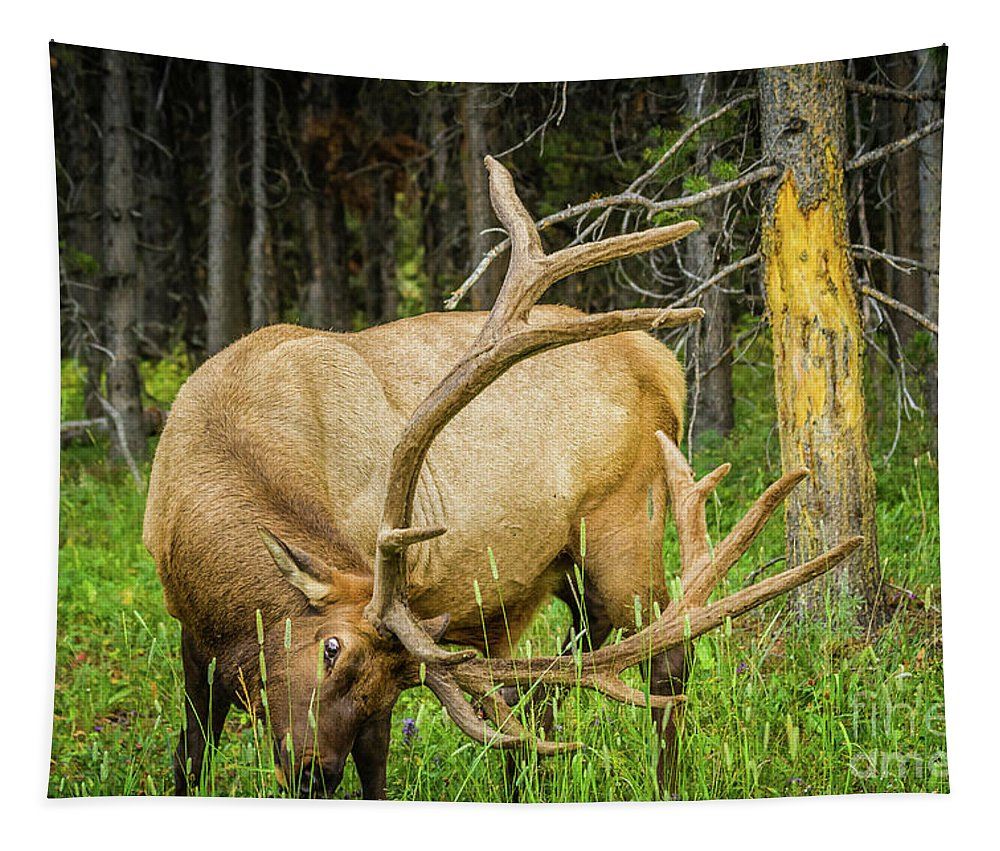 Nature Tapestry featuring the photograph Elk In The Woods by Mirko Chianucci