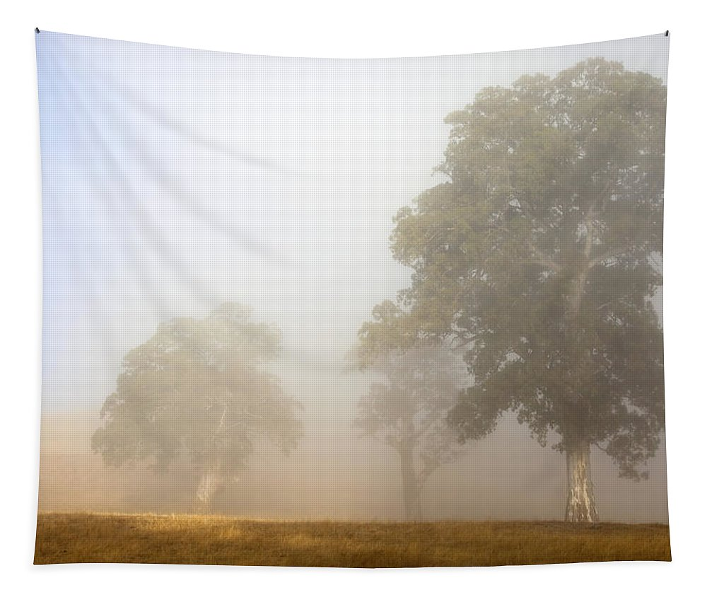 Gum Tree Tapestry featuring the photograph Emerging From The Fog by Mike Dawson