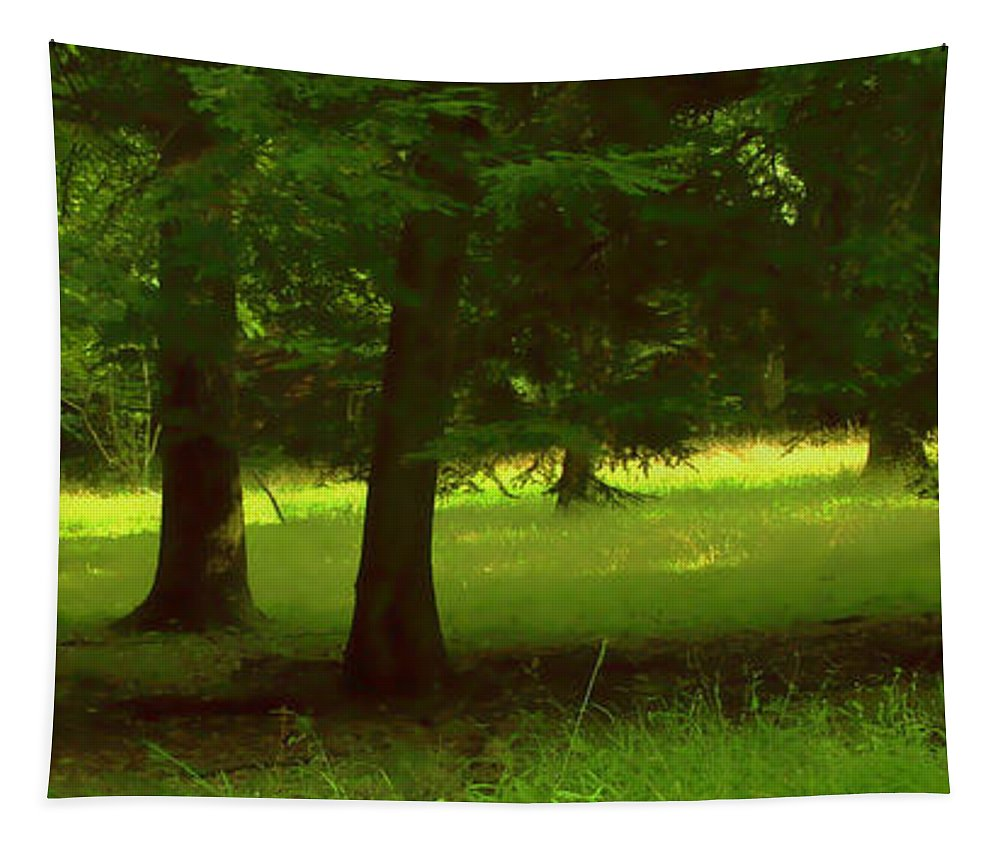 Nature Tapestry featuring the photograph Enchanted Forest by Linda Sannuti