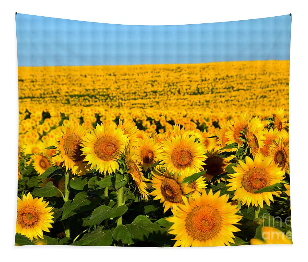 Helianthus Annuus Tapestry featuring the photograph Endless Sunflowers by Catherine Sherman