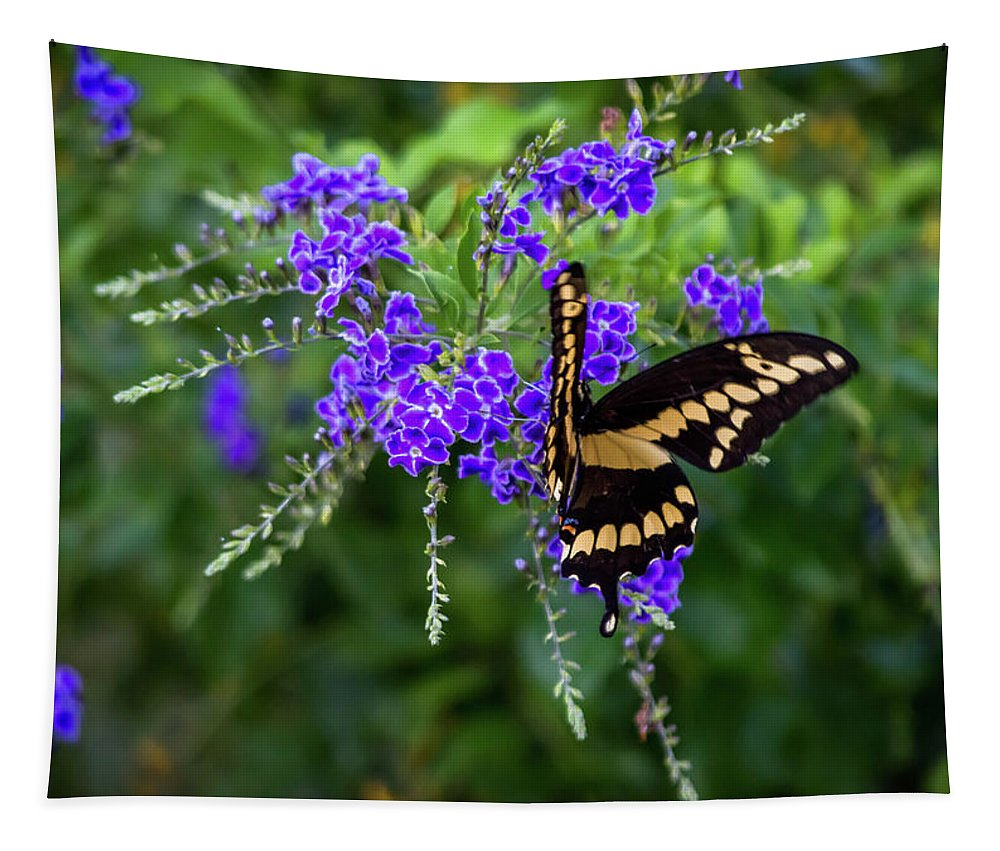 Butterfly Tapestry featuring the photograph Enjoying A Meal by Leticia Latocki
