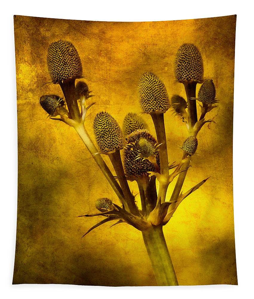 Leaf Tapestry featuring the photograph Eryngium Gold by John Edwards