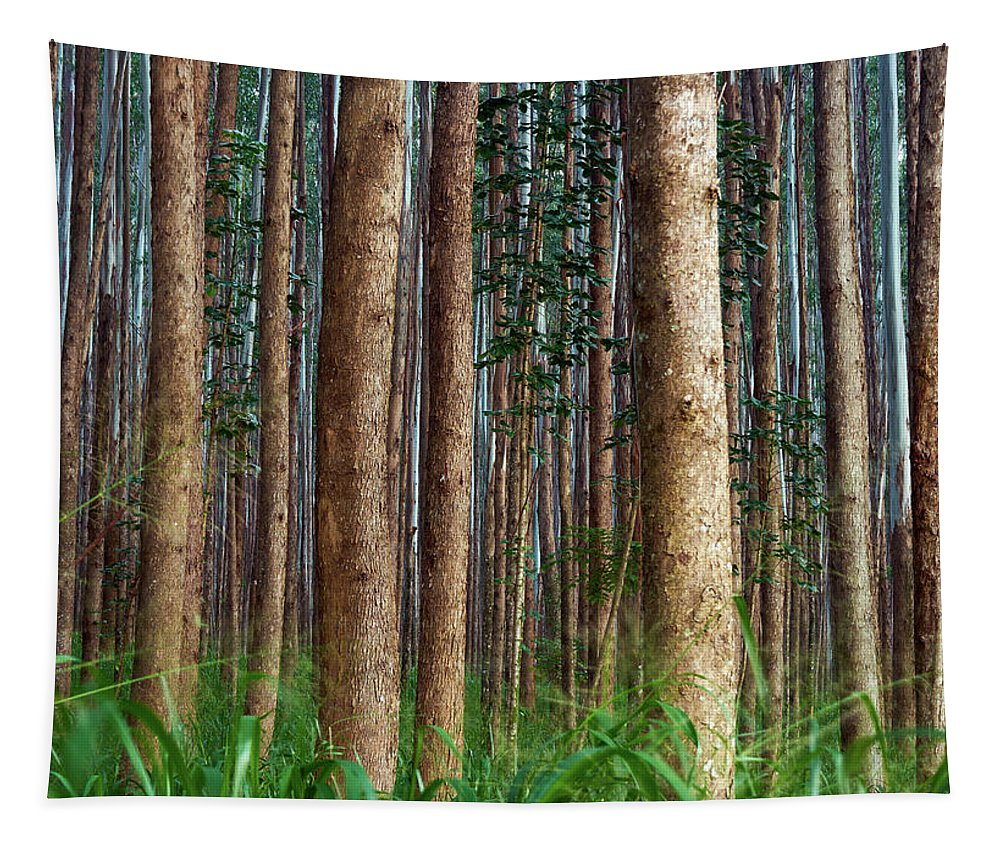 Hawaii Tapestry featuring the photograph Eucalyptus Forest by Christopher Johnson