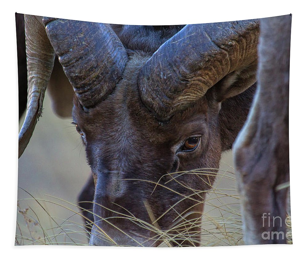 Bighorn Sheep Tapestry featuring the photograph Eye Contact by Jim Garrison