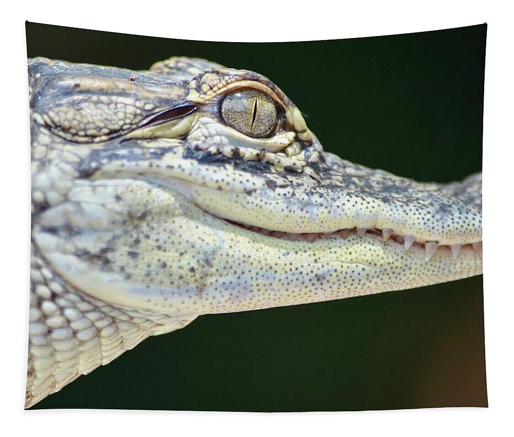 Alligator Tapestry featuring the photograph Eye Of The Alligator by Richard Bryce and Family