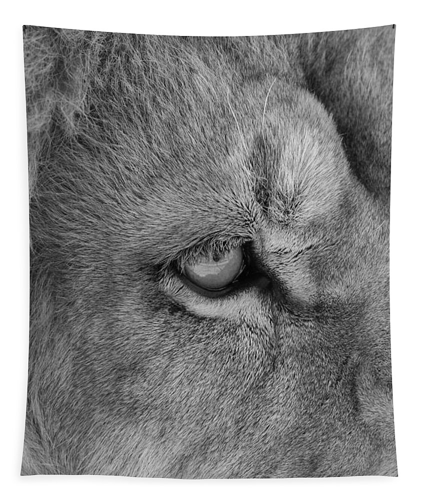 Lion Tapestry featuring the photograph Eye Of The Lion #2 Black And White by Judy Whitton