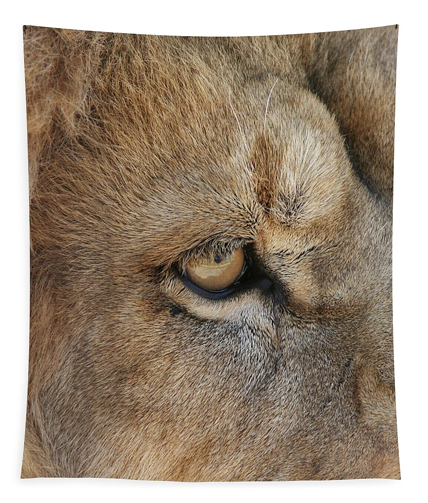 Male Tapestry featuring the photograph Eye Of The Lion #2 by Judy Whitton