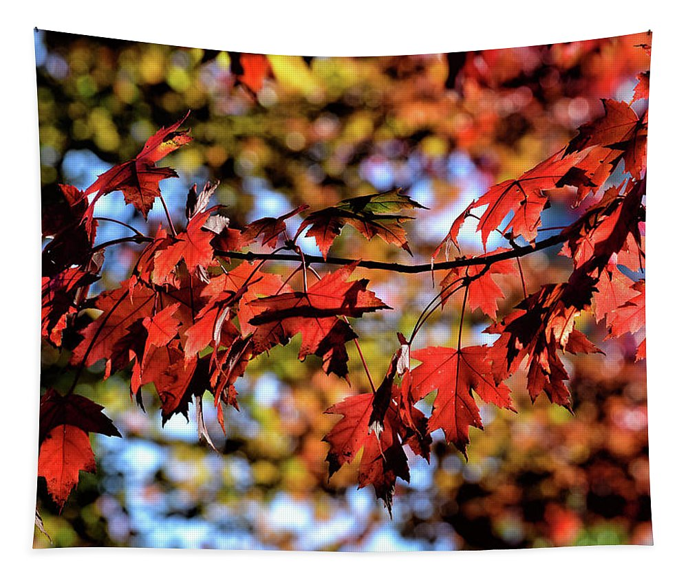 Autumn Tapestry featuring the photograph Fabulous Fall by Maria Keady