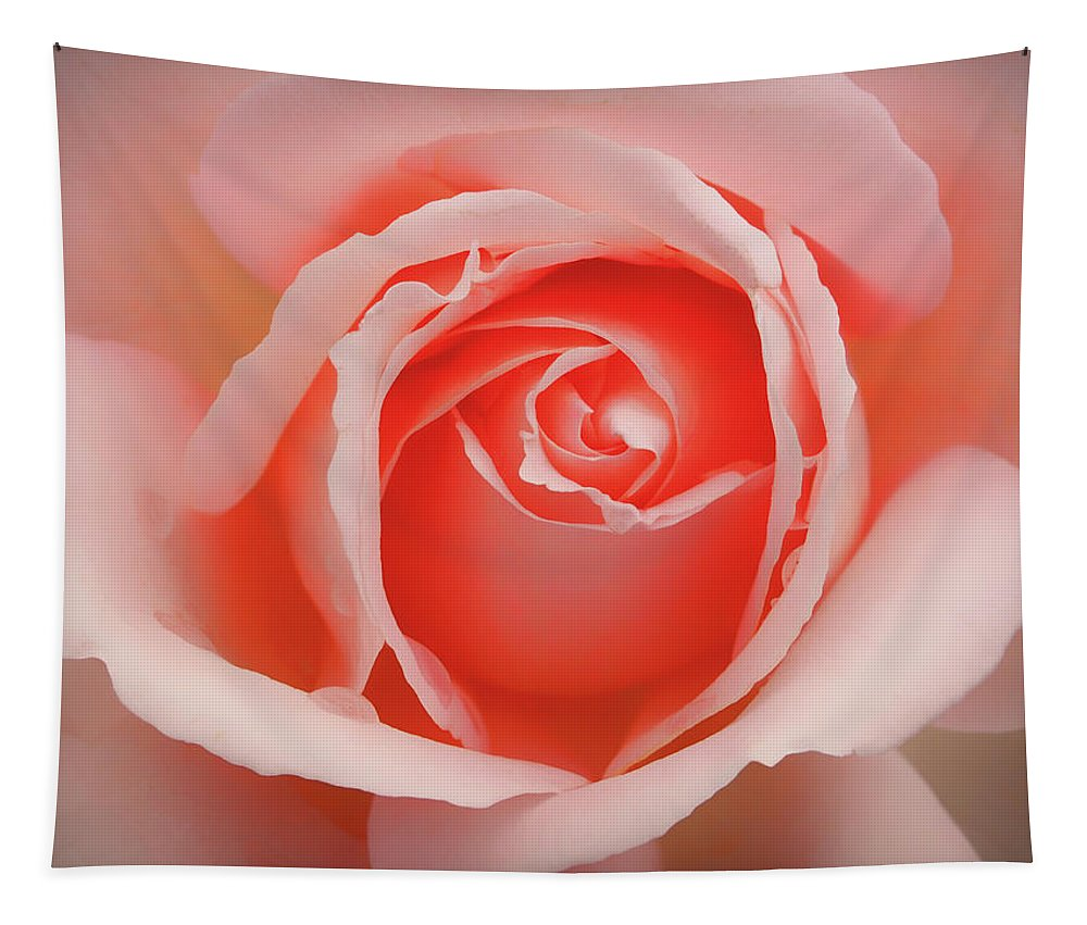 Rose Tapestry featuring the photograph Faded - Perfect Pink Rose by Philip Openshaw