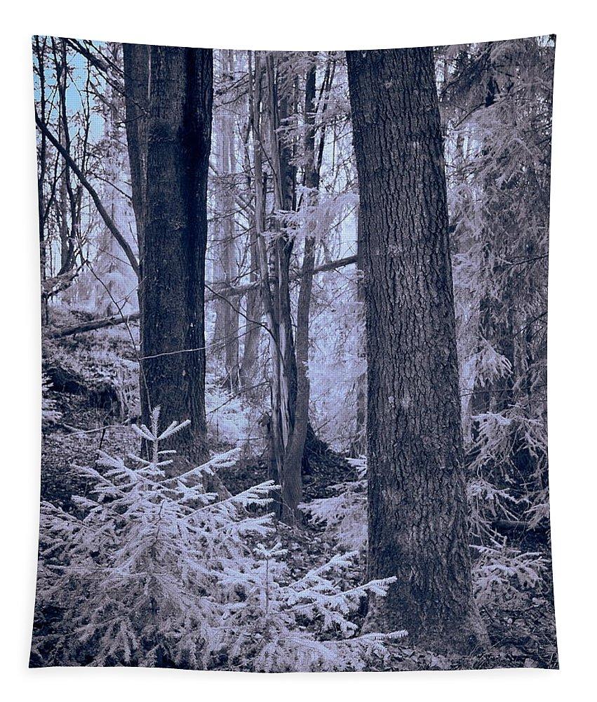 Jouko Lehto Tapestry featuring the photograph Fairy Forest by Jouko Lehto