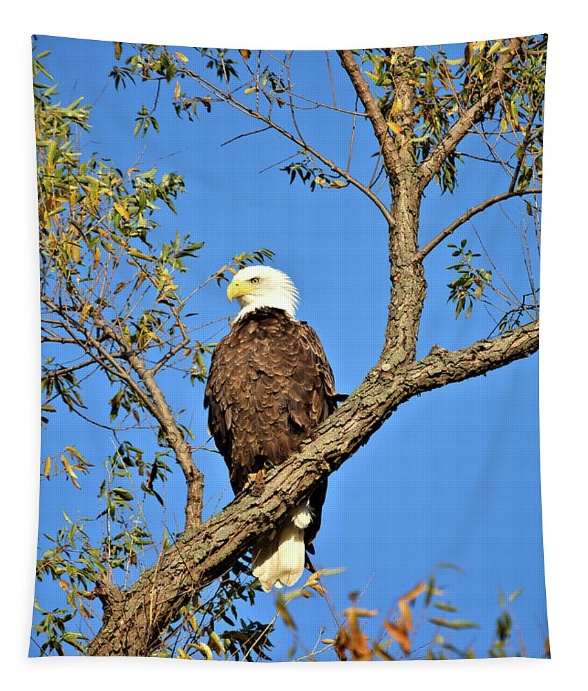 Eagle Tapestry featuring the photograph Fall Eagle by Bonfire Photography
