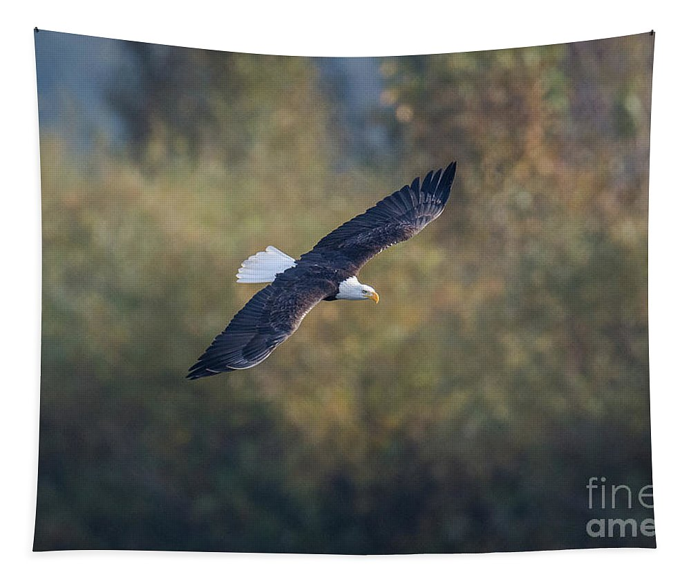 Eagle Tapestry featuring the photograph Fall Flight by Craig Leaper
