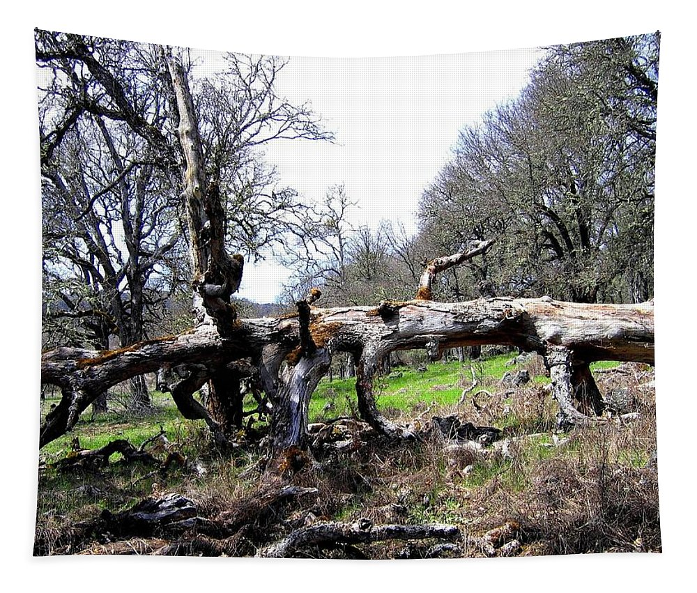 Oak Tapestry featuring the photograph Fallen Mighty Oak by Will Borden