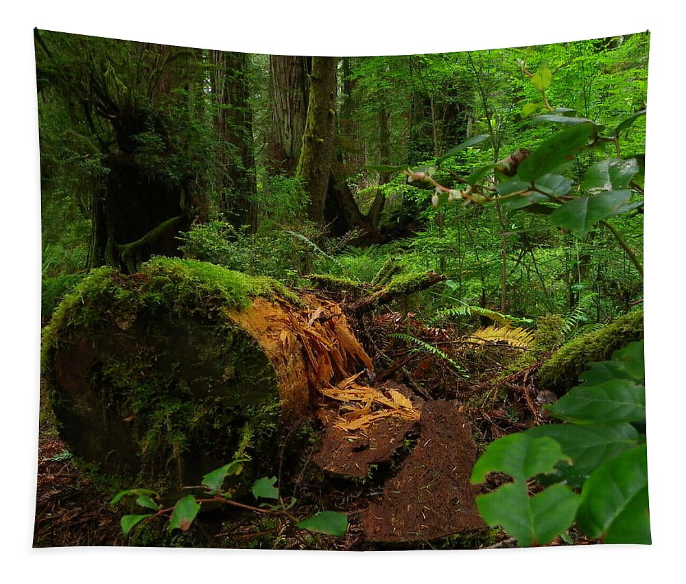 Landscape Tapestry featuring the photograph Fallen Trunk by Charleen Treasures