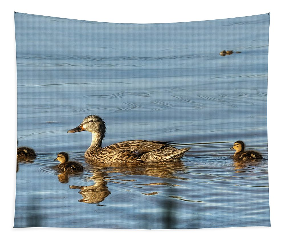 Ducks Tapestry featuring the photograph Family Outing by Saija Lehtonen