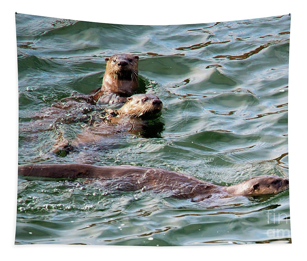 Otters Tapestry featuring the photograph Family Play Time by Mike Dawson