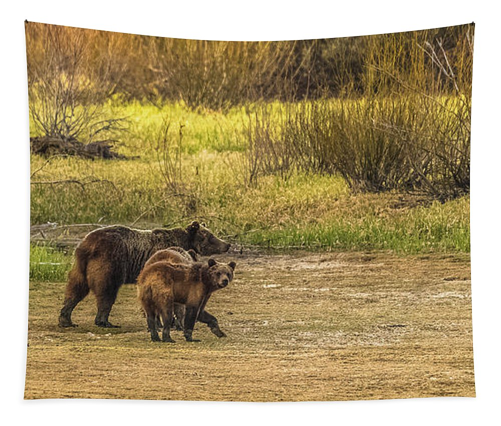 Grizzly 610 Tapestry featuring the photograph Family Walk At Dawn by Yeates Photography