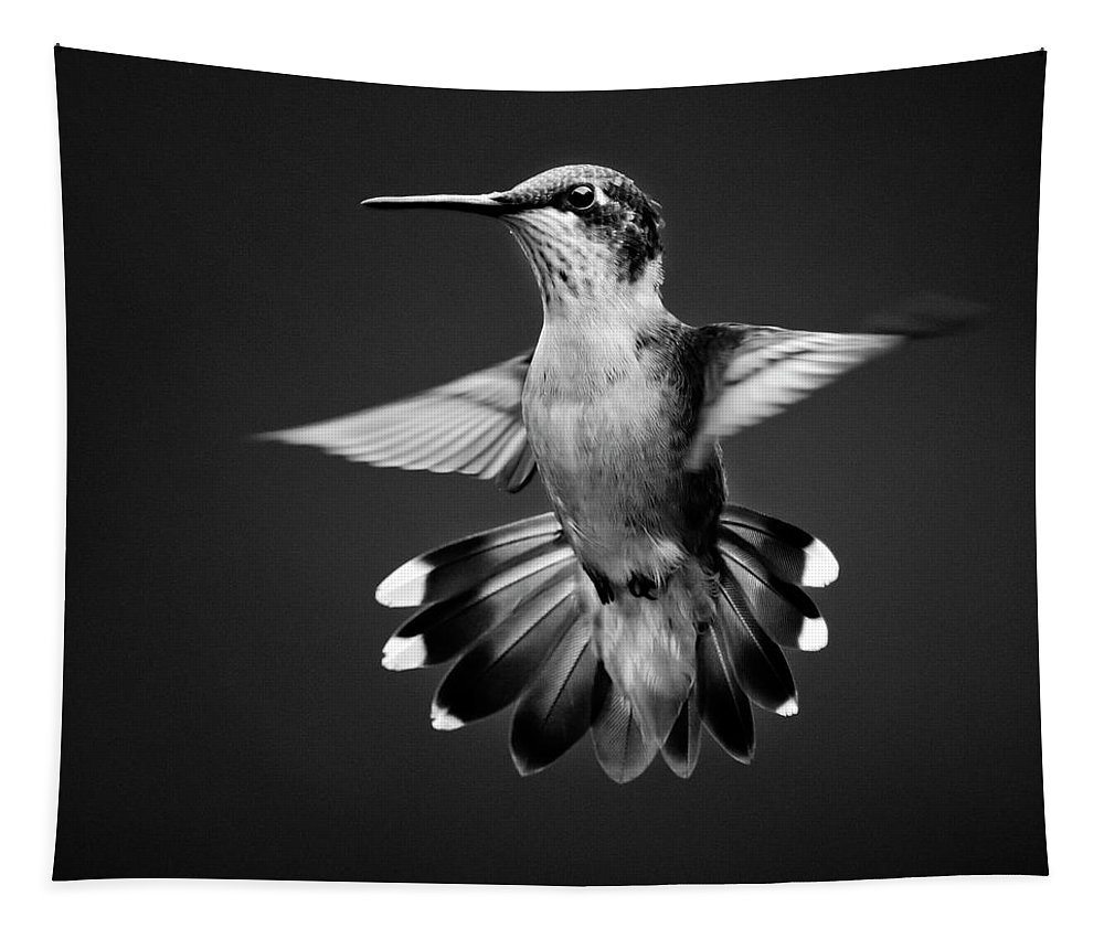 Black And White Tapestry featuring the photograph Fantail Hummingbird Square Bw by Christina Rollo