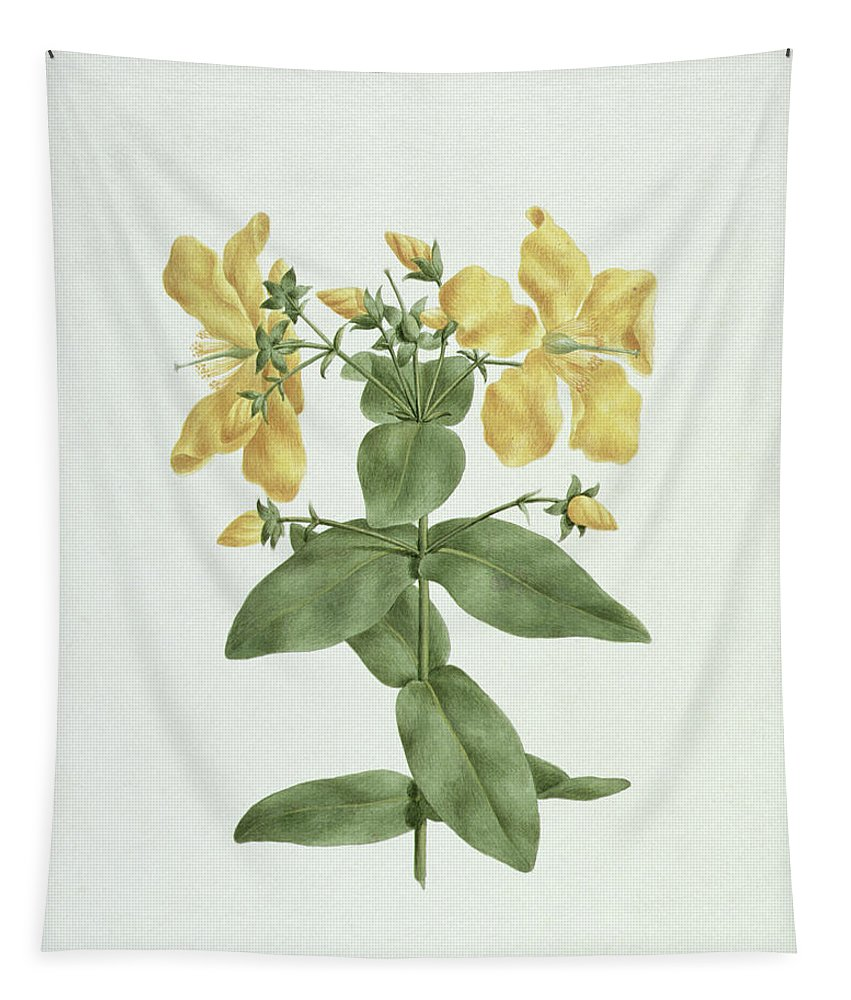 Feel-fetch Tapestry featuring the painting Feel-fetch - Hypericum Quartinianum by James Bruce