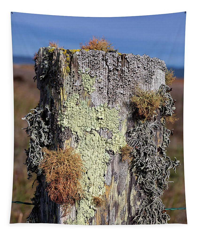 Fence Post Tapestry featuring the photograph Fence Post Encrusted With Lichen by Kathleen Bishop