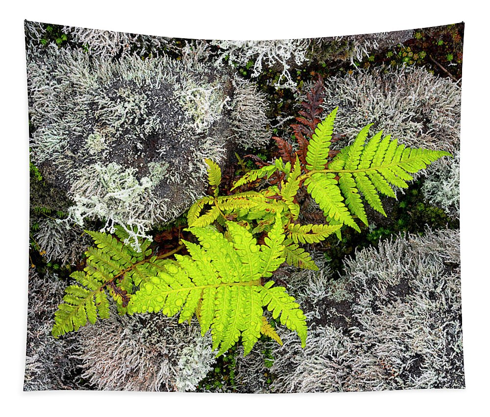 Fern Tapestry featuring the photograph Fern And Lichen by Christopher Johnson