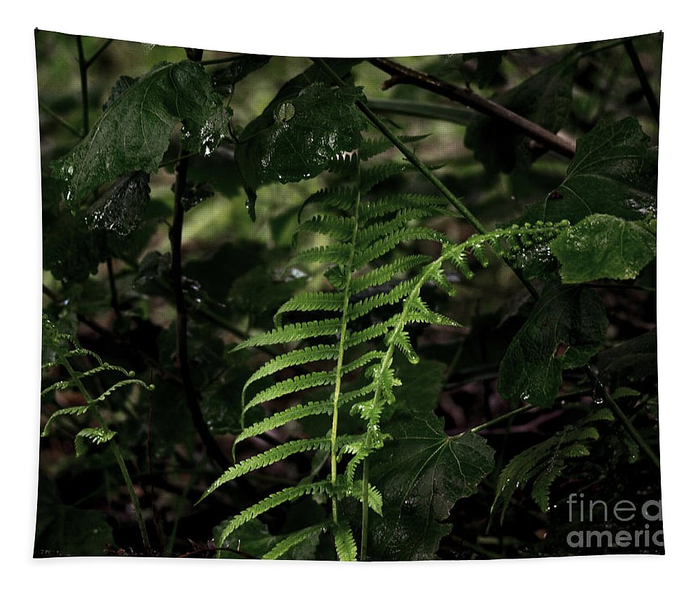 Fern Tapestry featuring the photograph Fern Green by Gary Richards