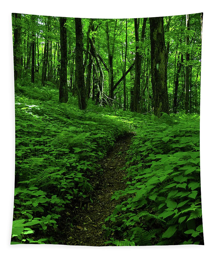 Fern Lined At In Ma Tapestry featuring the photograph Fern Lined At In Ma by Raymond Salani III