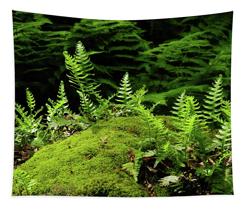 Ferns And Moss On The Ma At Tapestry featuring the photograph Ferns And Moss On The Ma At by Raymond Salani III