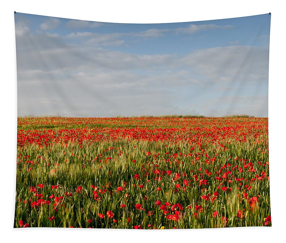 Poppy Anemones Tapestry featuring the photograph Field Of Red Poppy Anemones Late In Spring by Michalakis Ppalis