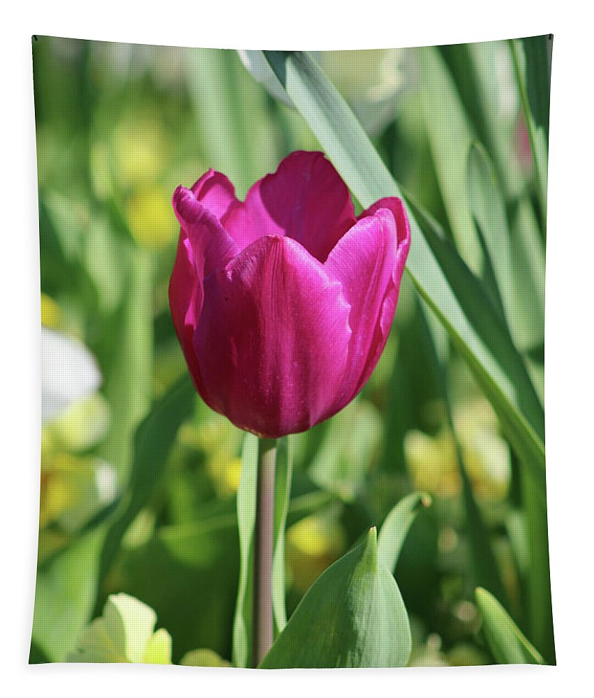 Tulip Tapestry featuring the photograph Fields Of Beauty 55 by Pamela Critchlow
