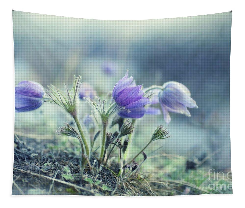 Pulsatilla Vulgaris Tapestry featuring the photograph Finally Spring by Priska Wettstein