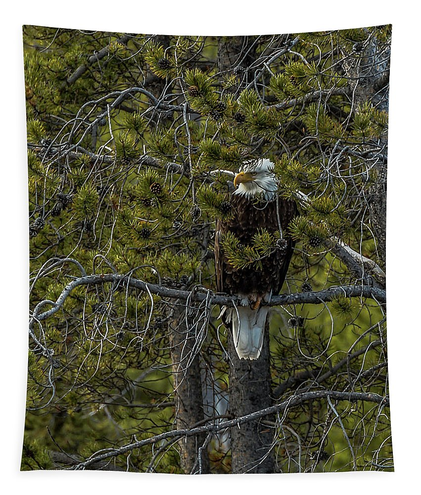 American Bald Eagle Tapestry featuring the photograph Finding Shelter In Rain by Yeates Photography