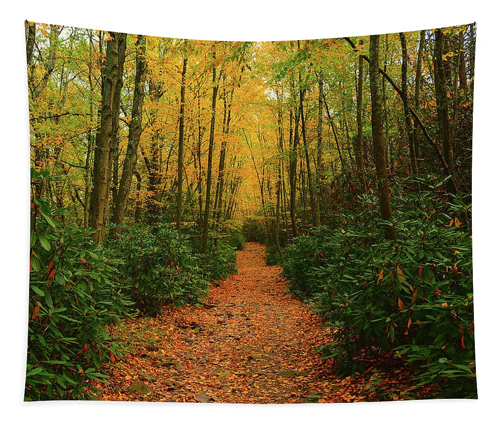 Fire Road Up Mount Minsi Tapestry featuring the photograph Fire Road Up Mount Minsi by Raymond Salani III