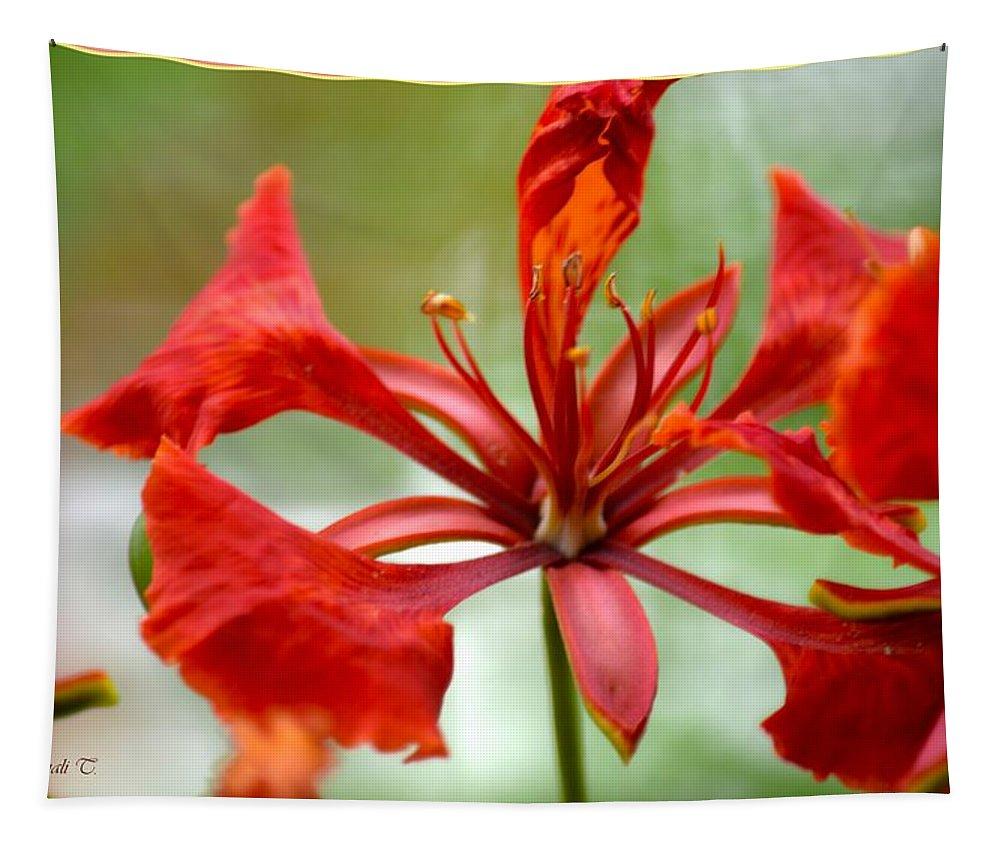 Flamboyant Beauty Tapestry featuring the photograph Flamboyant Beauty by Sonali Gangane
