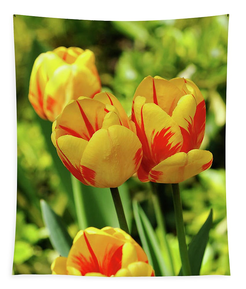 Yellow And Red Tulips Tapestry featuring the photograph Flames by Debbie Oppermann