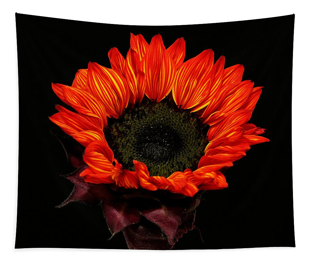 Sunflower Tapestry featuring the photograph Flaming Flower by Judy Vincent